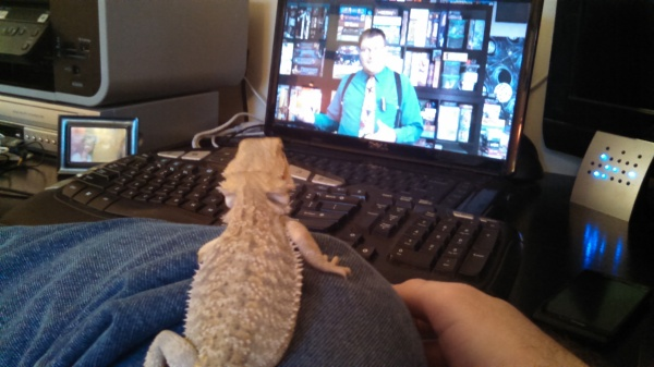Dragon watching the computer